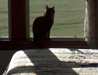 Billie, watching the Palouse morning