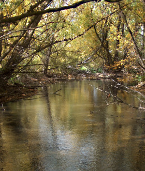 Dappled light in a side channel of the Boise R.