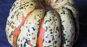 Carnival squash: it's what's for dinner