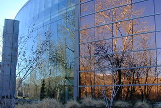 Cottonwoods in glass, Boise River, 2003