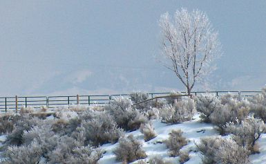 Boise foothills hoarfrost, January, 2004