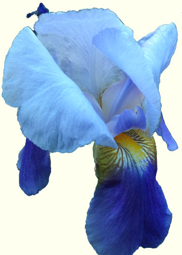 Just another iris photo, 2016