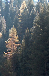 Morning in the Payette canyon, Oct. 2005