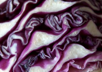 Cut red cabbage, up close and personal