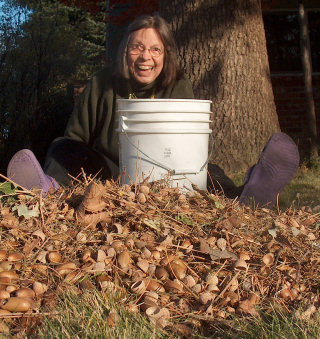 Jeanette, bucketizing the 2008 acorn crop