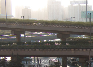 Morning in Shanghai, 2003
