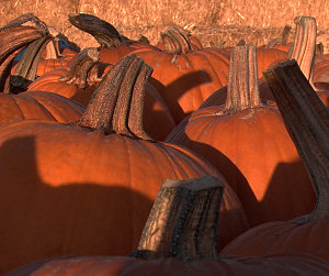 Photo: sunset in pumpkins, 2010