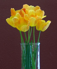 Yellow-orange tulips in a vase, 2010