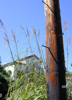 Poa and pole, Palo Alto, 2000
